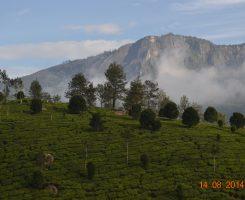Il Masala Chai: il tè indiano speziato